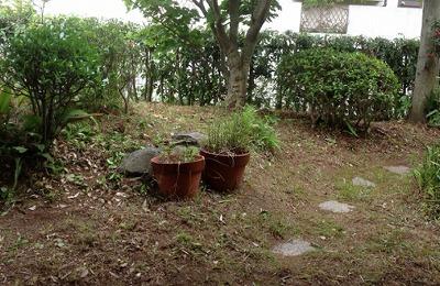 庭の清掃(後)